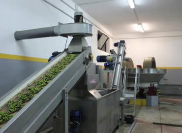 Qualità certificata dell'olio di oliva